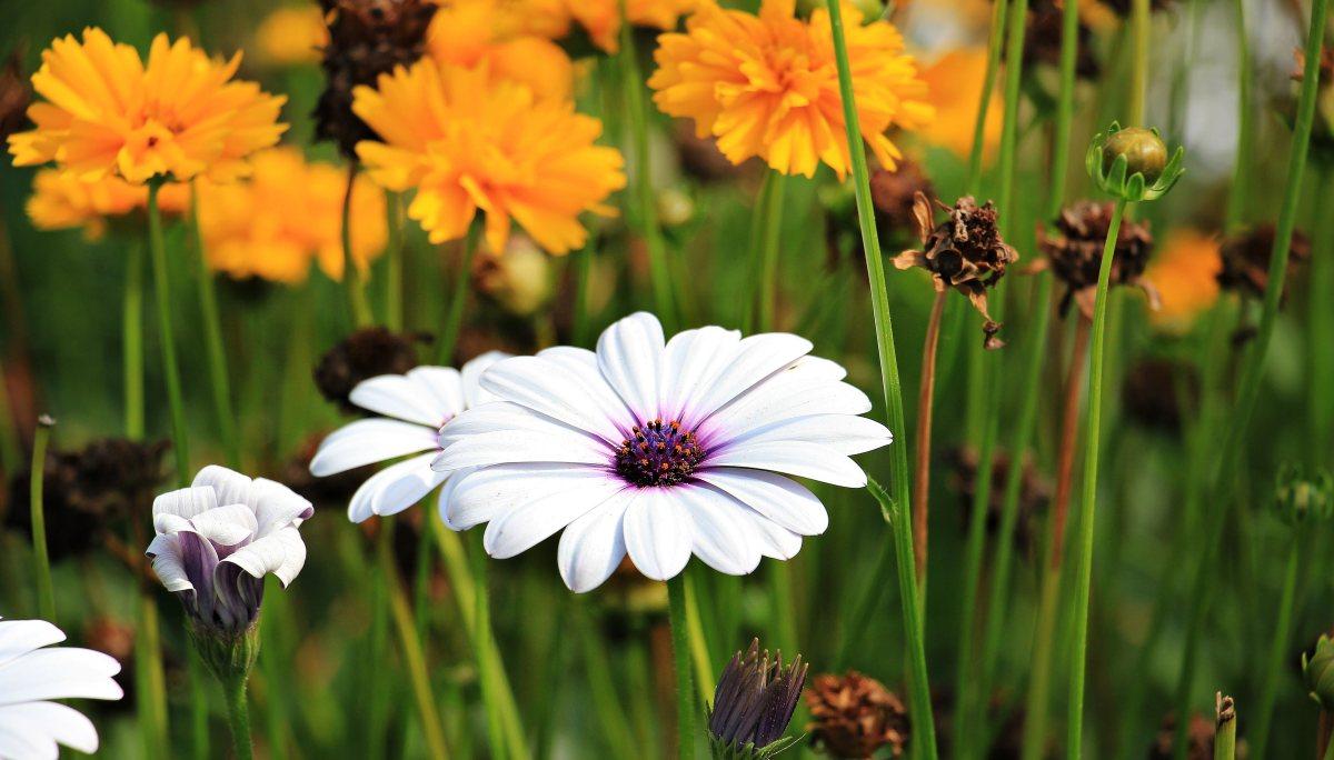 planter fleurs printemps