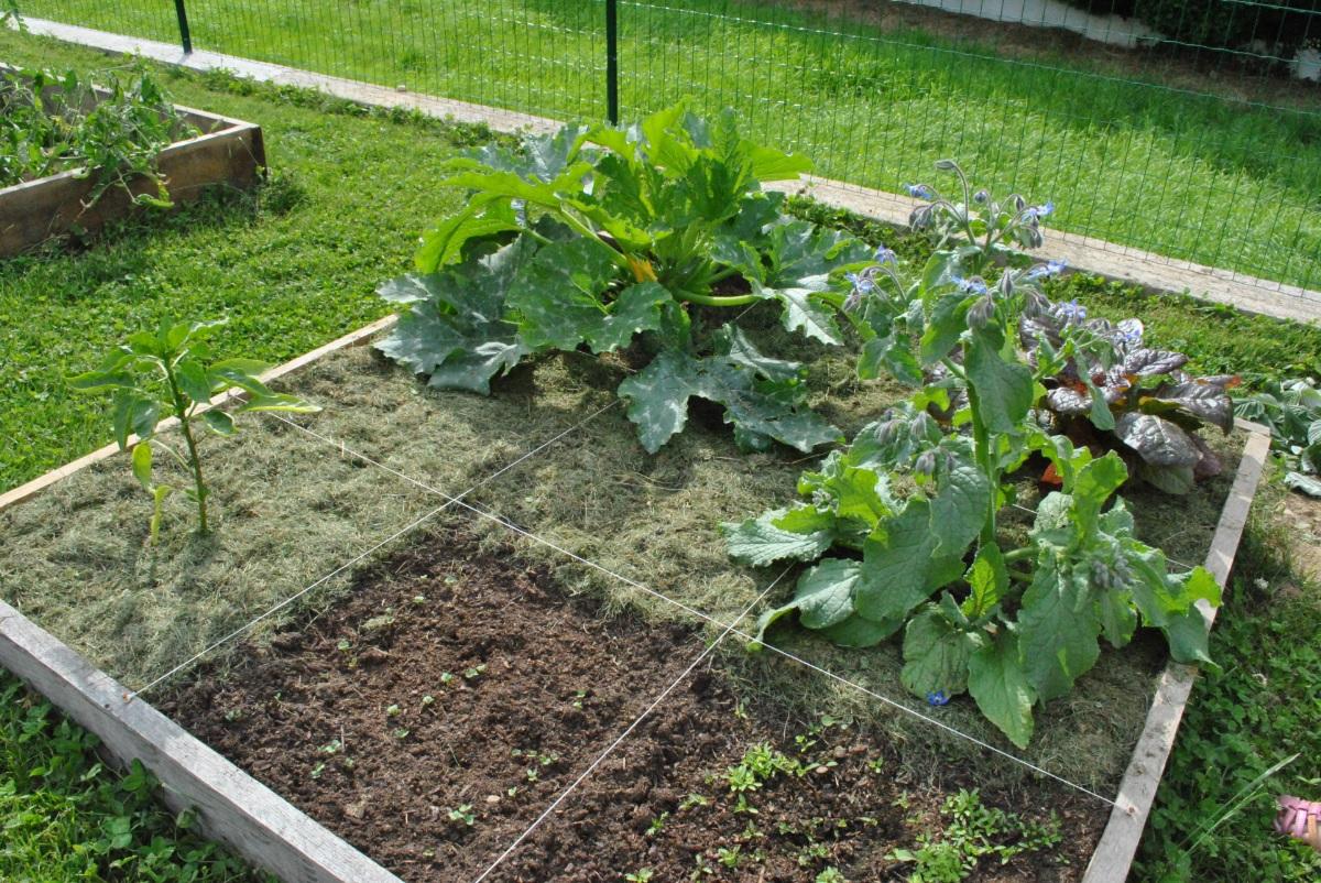 Potager En Carré Fabrication le potager en carré, quand les fruits et légumes se