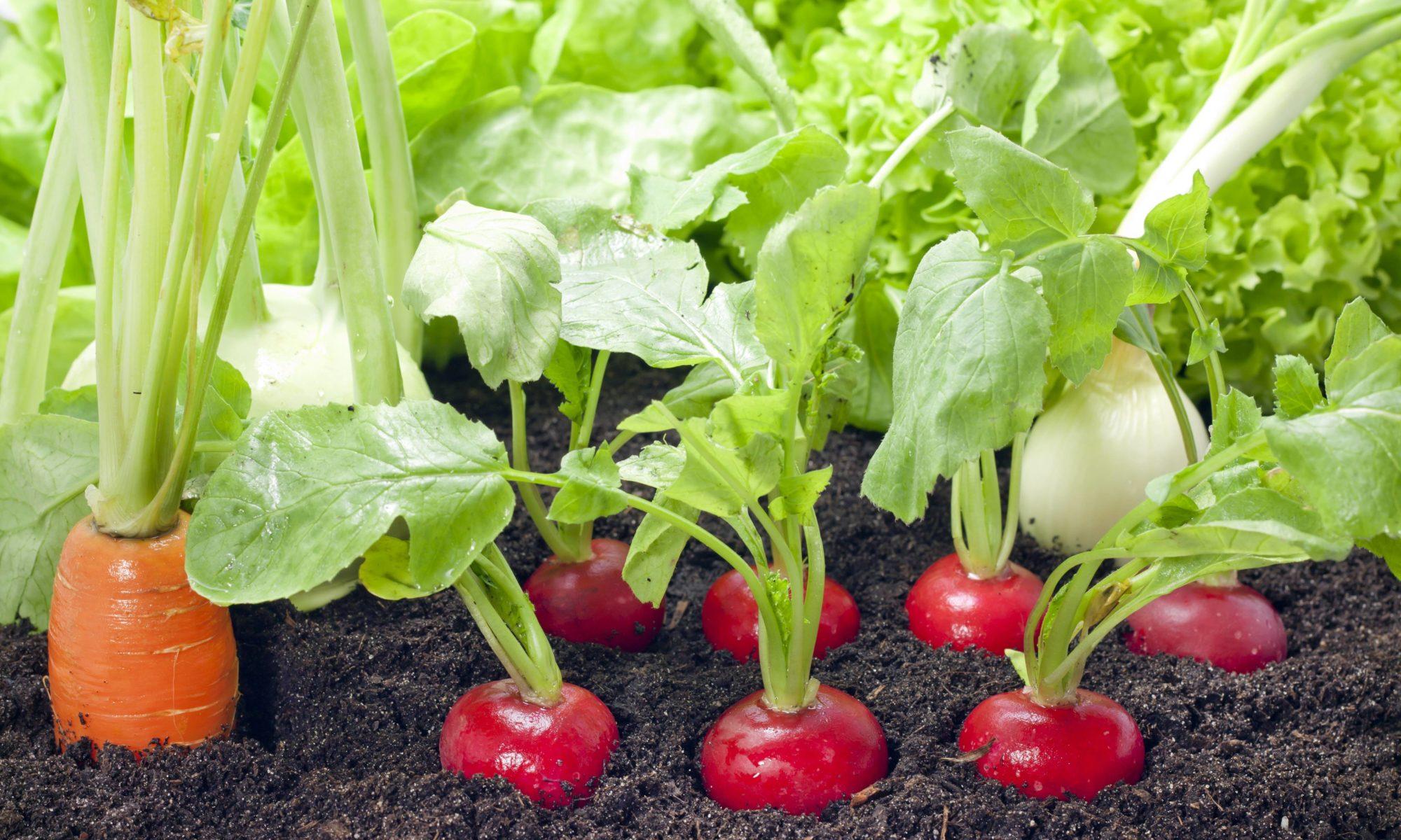 Legumes A Mettre Dans Le Jardin tous nos conseils pour cultiver des légumes dans son potager