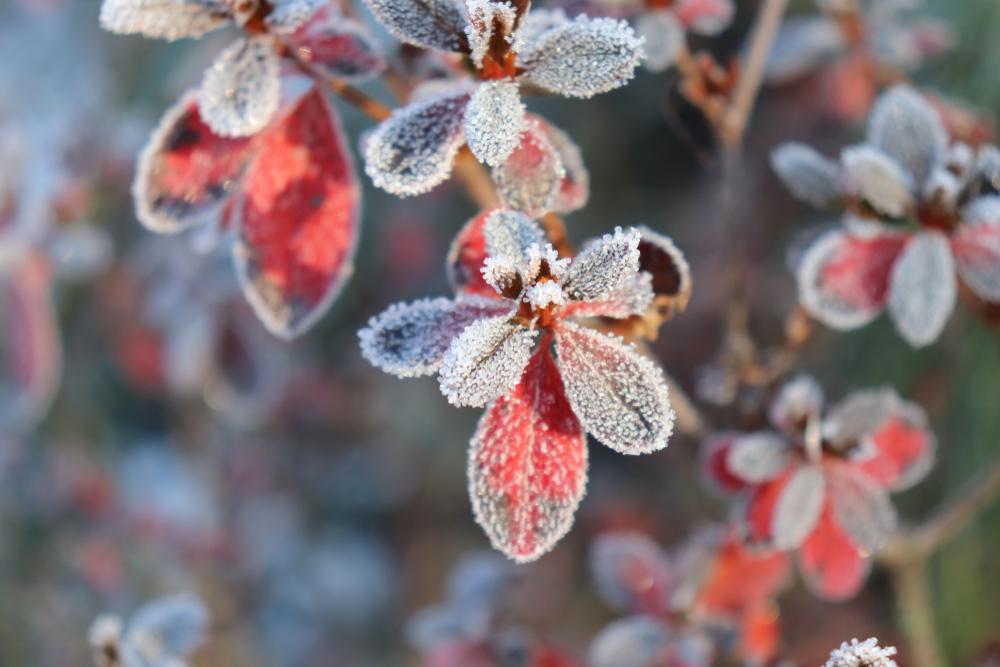 plantes avec fine couche de gel