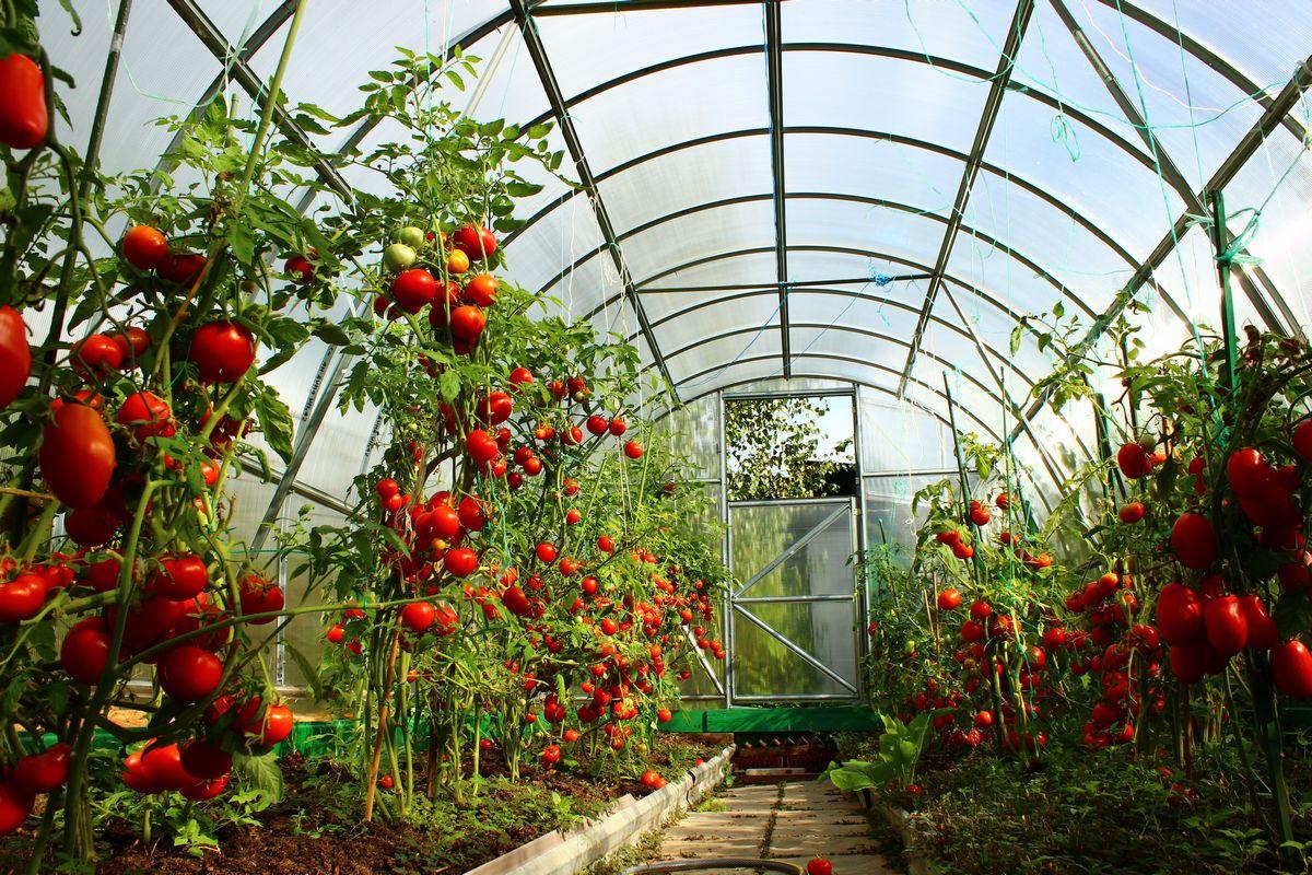 serre jardin pvc