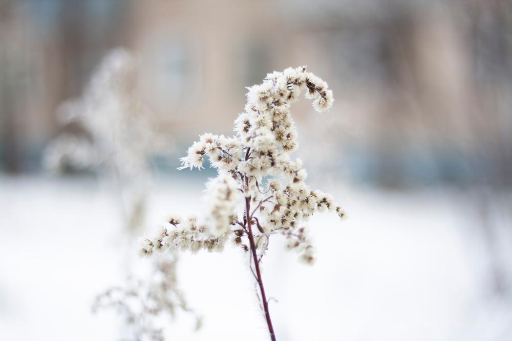 Plantes résistant au froid