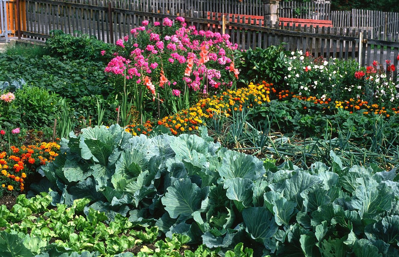 associations de plantes permaculture