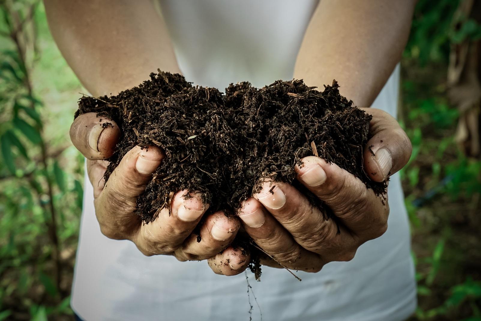 humus issu de l'activité naturelle des sols