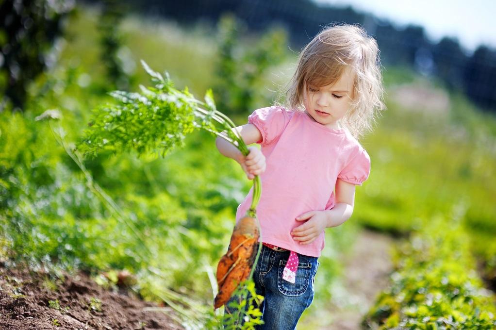 récolte de vrais légumes de jardin bio naturel