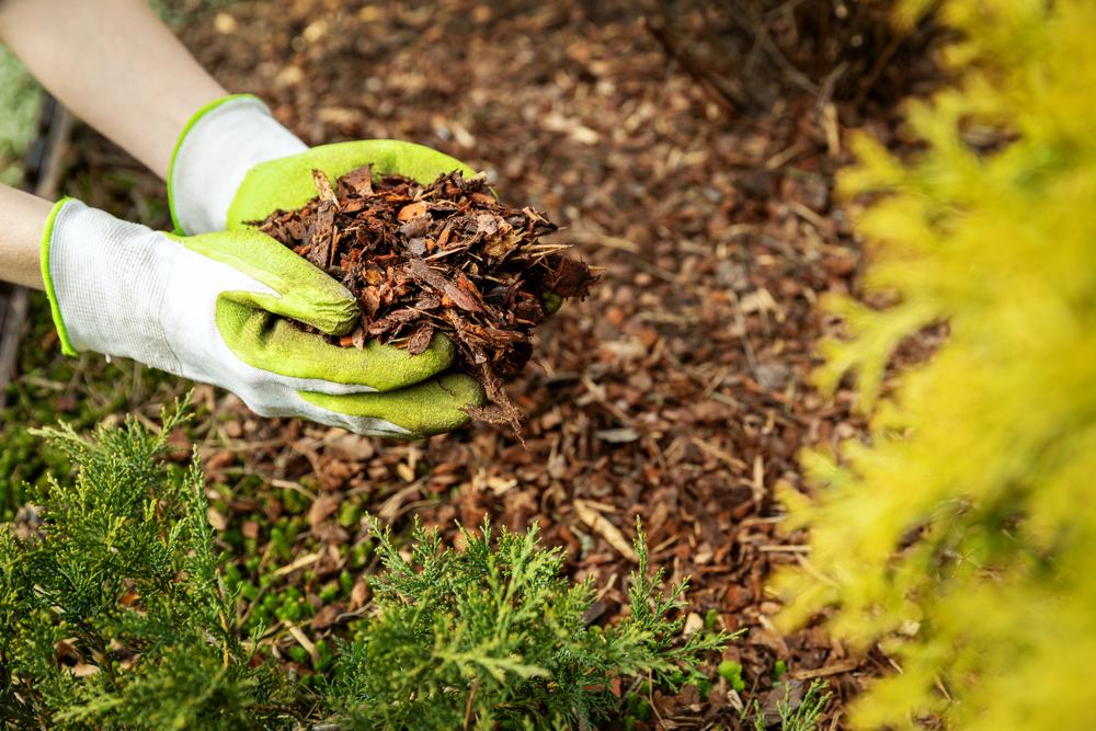 La technique du mulch