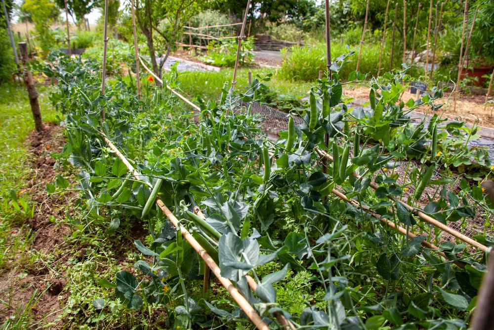choix plantes permaculture